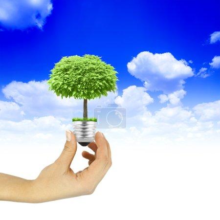 Foto de Bombilla de mano con árbol creciendo en el interior sobre fondo azul del cielo - Imagen libre de derechos
