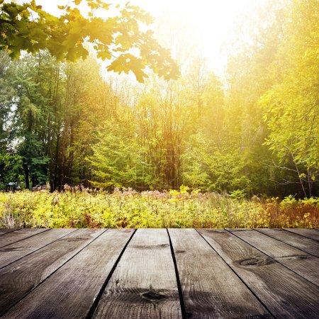 Photo pour Bel lumière du soleil dans la forêt d'automne. fond de beauté nature - image libre de droit