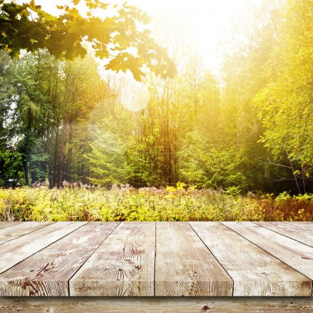 Photo for Beautiful sunlight in the autumn forest. Beauty nature background - Royalty Free Image