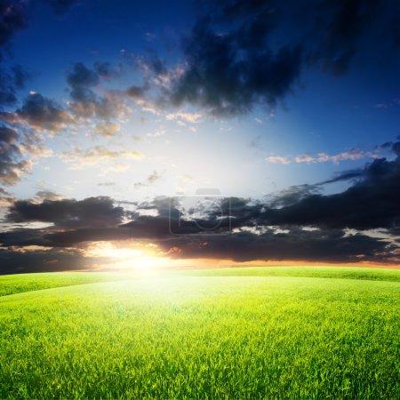 Green field under sky