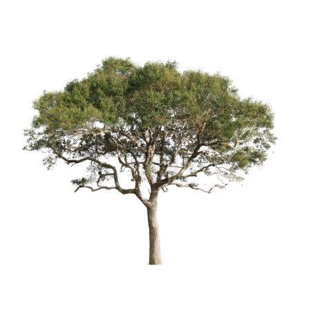 einzelner grüner Baum