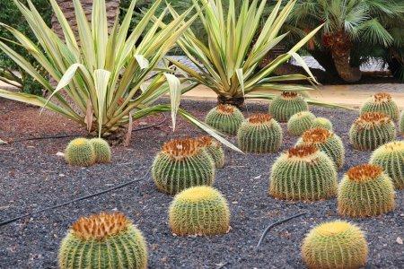 Cactus garden in Tenerife