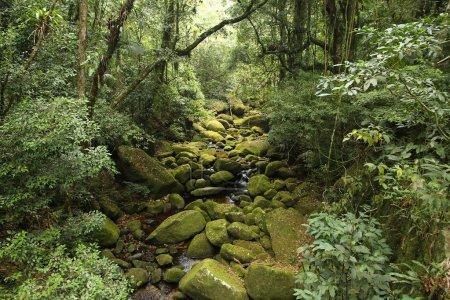 Brazil rainforest