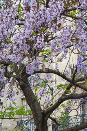 Book hang on tree with blue flowers France, Paris