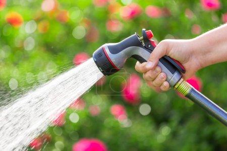Watering garden with  flowers
