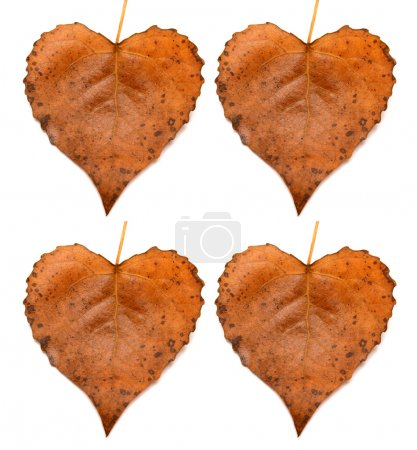 Collection of leaves heart