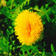 Close-up of beautiful dandelion at sunny day in sp...