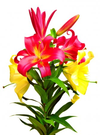 Bouquet of beautiful flowers lily isolated on whit...
