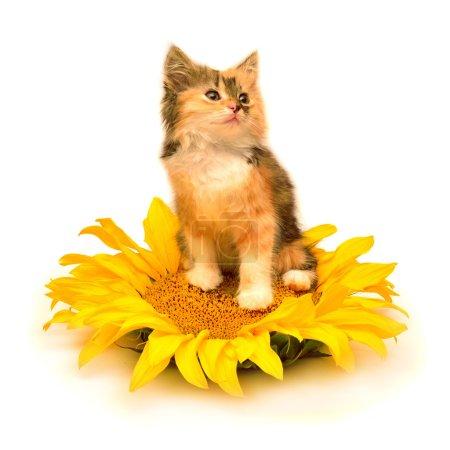 Playful cute kitten