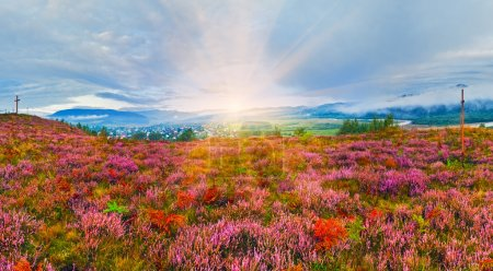 September sunrise country foothills with heather flowers and woo