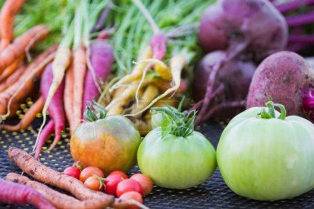 Photo pour Légumes biologiques cultivés dans la cour arrière, récoltés à l'automne - image libre de droit