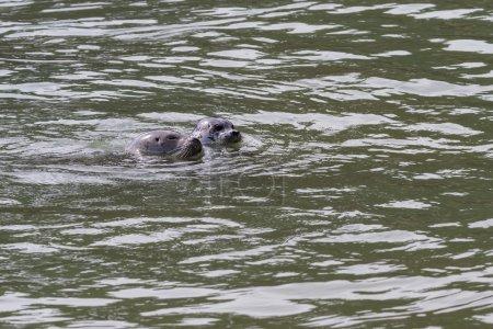 Seals in California