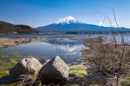 Reflection of Fujisan Mountain with cherry blossom in spring, Kawaguchiko lake, Japan