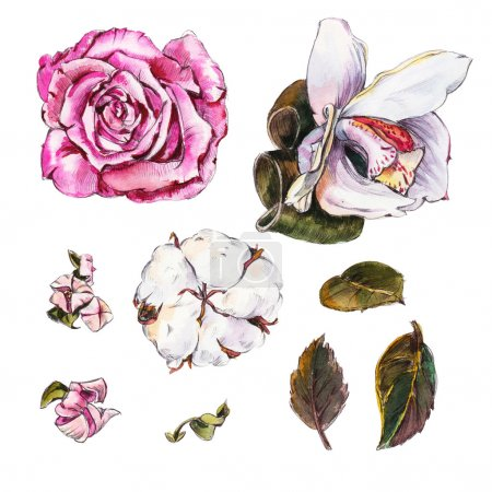 Watercolor Flowers. Roses and Orchids