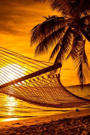 Palm tree with hammock
