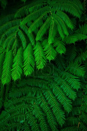 Green lush ferns growing in wild rain forest of Australia