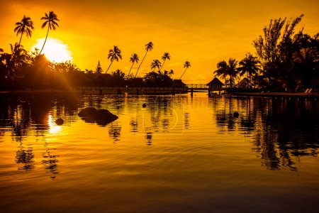Sunset in tropical paradise with palm trees