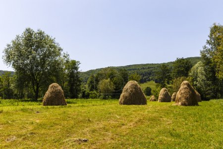 Haystacks on beautiful summer plateau in Carpathian mountain. Pa