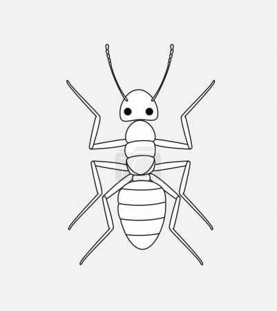 Ant Drawing Vector