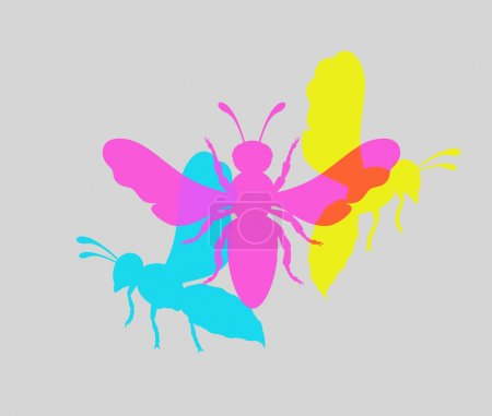 Colorful Wasp Insects