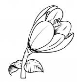 Tulip Flower Vector Drawing