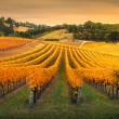 Gorgeous Vineyard in the Adelaide Hills...
