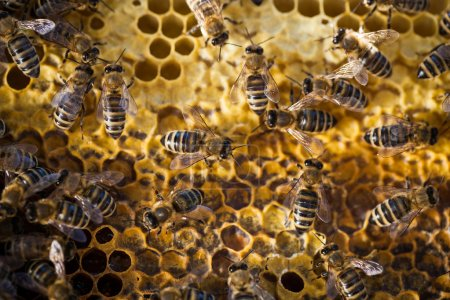 Macro shot of bees