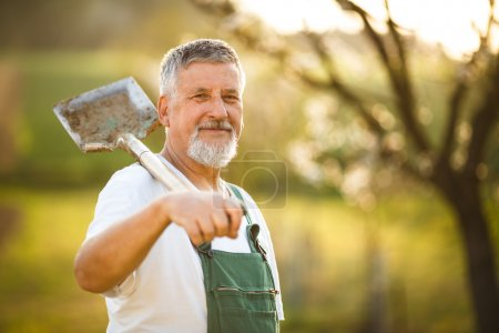 Senior man gardening in his garden