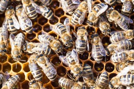 Macro shot of bees swarming