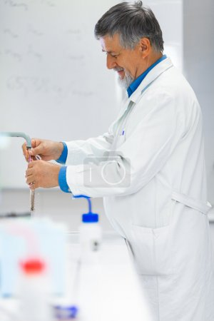 Senior male researcher carrying out scientific research