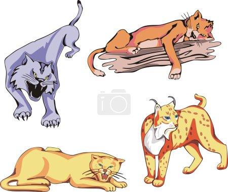 Illustration pour Ensemble de chats prédateurs sauvages. Illustrations vectorielles . - image libre de droit