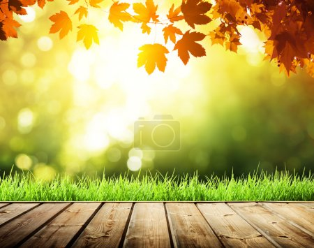 Photo for Wooden surface and autumn forest - Royalty Free Image