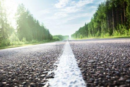 Photo pour Route en forêt ensoleillée (peu profonde DOF) - image libre de droit