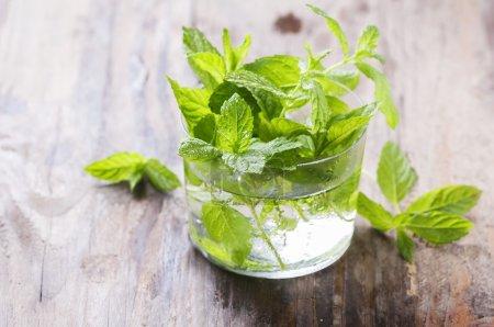 Fresh mint in glass
