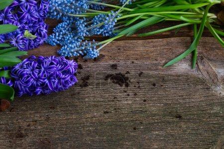 Hyacinth  and shovel