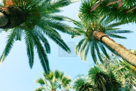 Photo for Tropical palm trees   on sky background, retro toned - Royalty Free Image