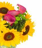 one bight sunflower