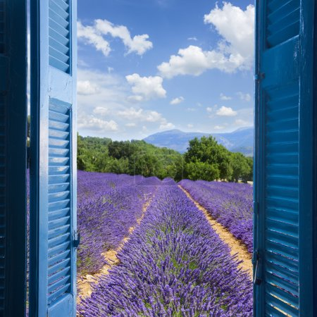 Photo for Lavender field with summer blue sky through wooden shutters, France - Royalty Free Image