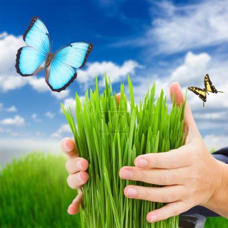 Photo pour Protection de l'écologie - mains tenant l'herbe verte et les papillons, ciel bleu et pelouse au premier plan - image libre de droit