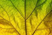 Podzimní listí textur