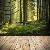 Wood terrace and perspective view on green morning forest