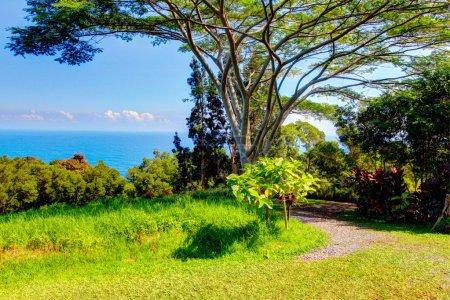 A tropical garden . Garden Of Eden, Maui Hawaii