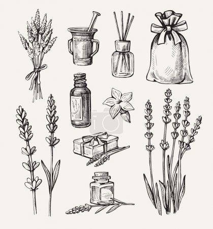 Illustration for Vector hand drawn lavender set on white background - Royalty Free Image