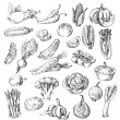 Vector set of different hand drawn vegetable...