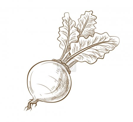 picture of beet with leaves