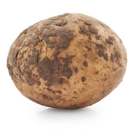 Raw potato on white