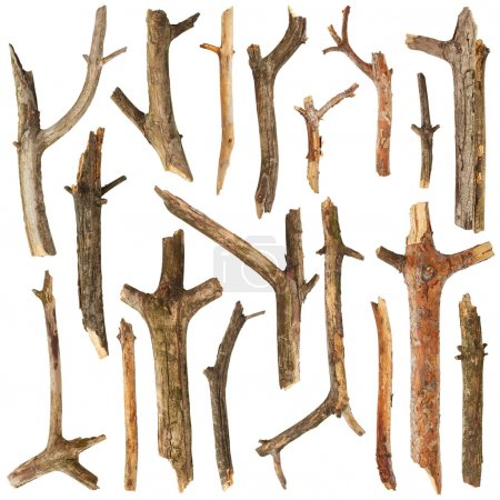 Photo pour Branches d'arbres isolées sur fond blanc - image libre de droit