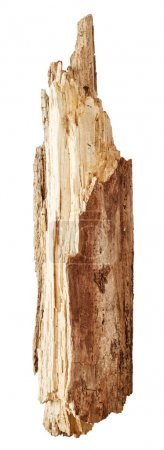 Part of tree trunk