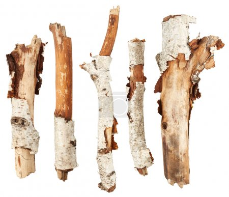 Photo pour Bâtons de bouleau isolés sur fond blanc - image libre de droit