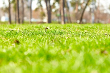 Photo for Beautiful green grass. Nature background - Royalty Free Image